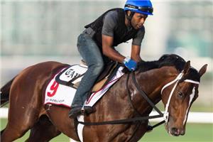 Mshawish Taylor Made Stallions