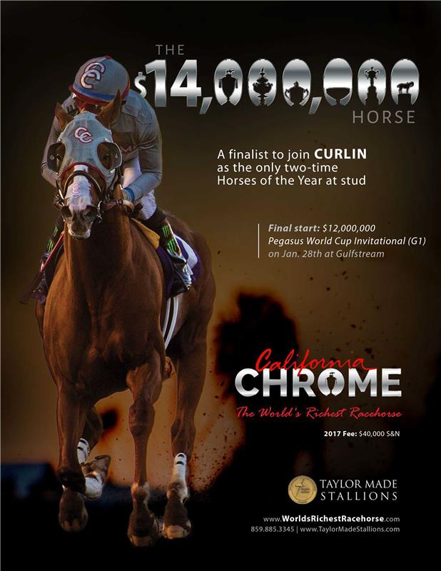 CALIFORNIA CHROME  Taylor Made Stallions