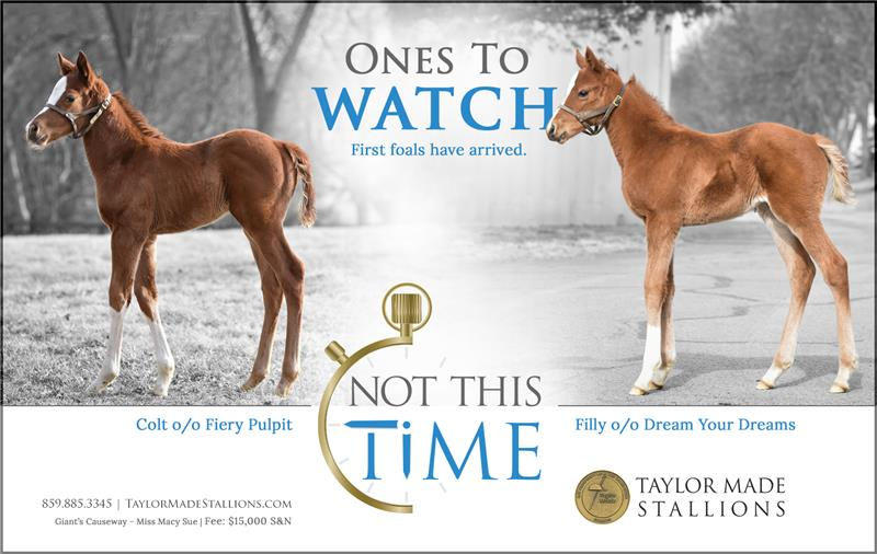 183022-NotThisTime-FirstFoals-half-TDN
