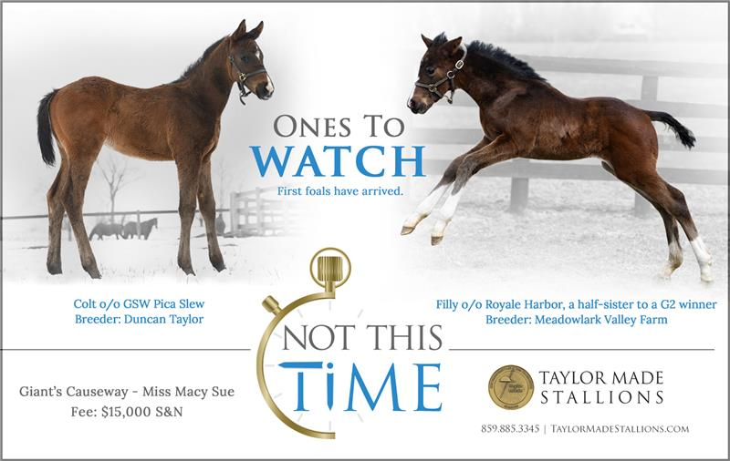 183892-NotThisTime-FirstFoals-half-TDN