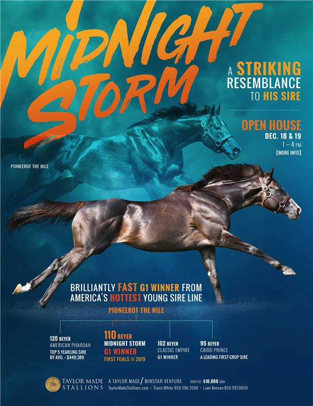 189934-MidnightStorm-TDN-FINAL