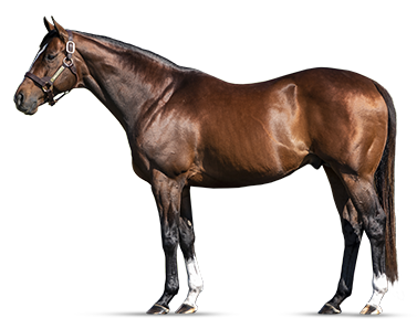 MSHAWISH - Medaglia d'Oro's Most Accomplished G1 Son in the World