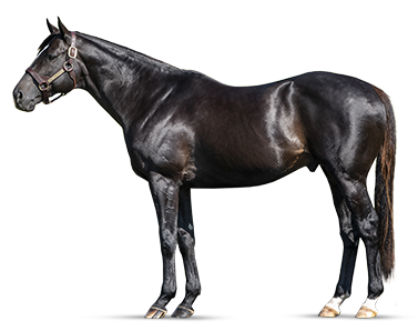 MIDNIGHT STORM - Brilliantly-Fast G1 Winner by PIONEEROF THE NILE