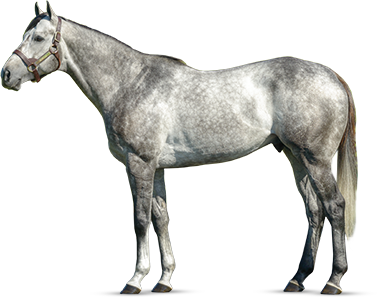 GRAYDAR - The Unbridled Legacy Continues